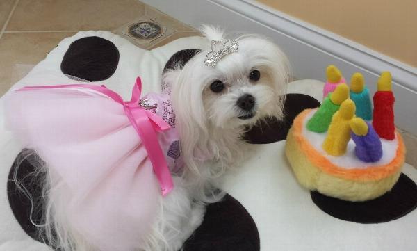 Princess Tiara Dog Barrette