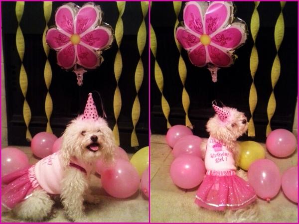 Puppy Party Hats - Pink
