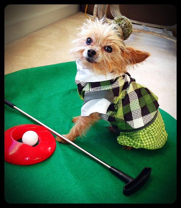 Putter Pup Halloween Dog Costume