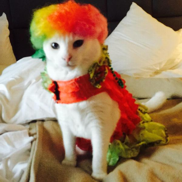 Blaze The Cat Halloween Costume