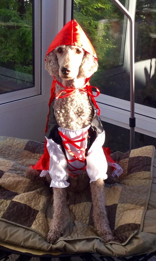 Rubie S Red Riding Hood Dog Costume Baxterboo