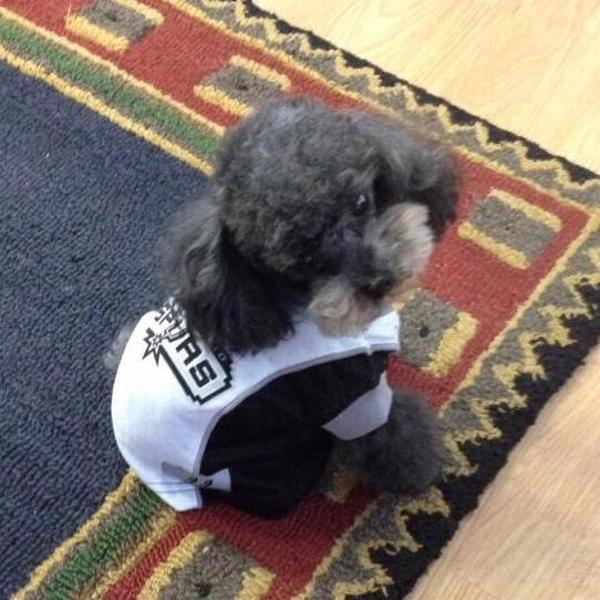San Antonio Spurs Dog Jersey - White