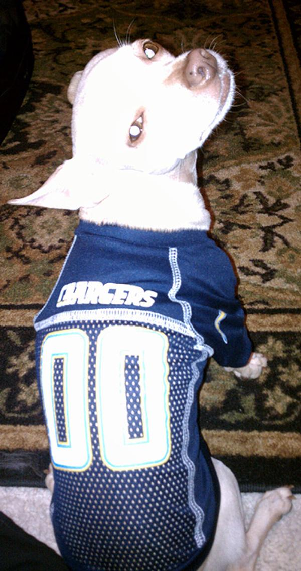 San Diego Chargers Dog Jersey | BaxterBoo