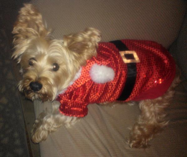 Santa Claus Sequin Dog Hoodie