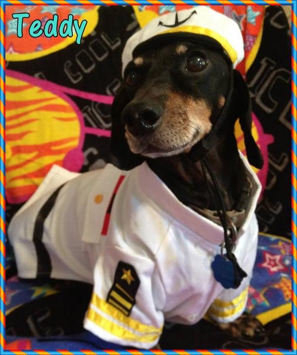 Sea Captain Dog Costume