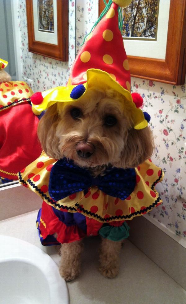 Shiny Clown Costume