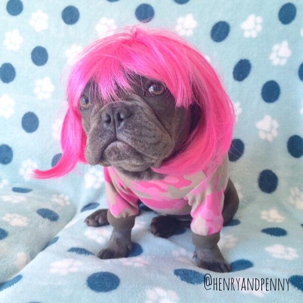 Short Bob Wig Dog Costume - Hot Pink