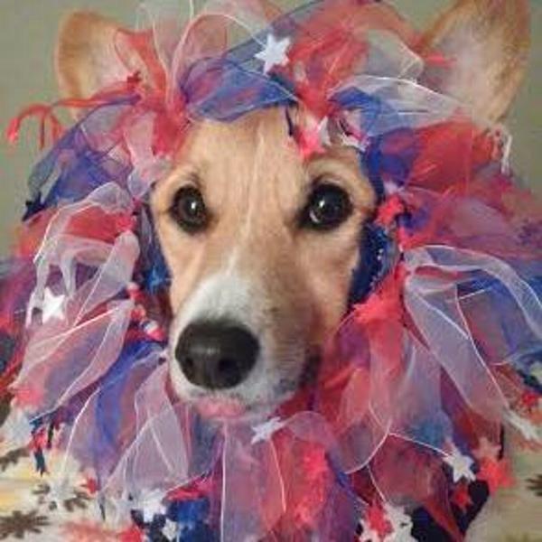Smoochers Pet Scrunchie - Patriotic Stars