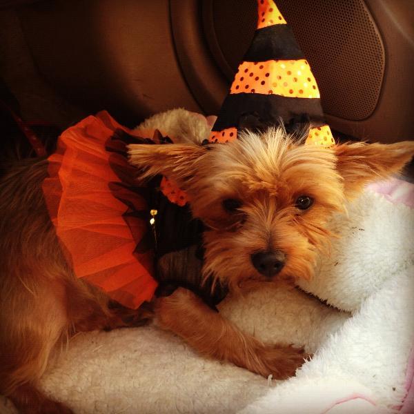 Halloween Costumes Ocala Fl