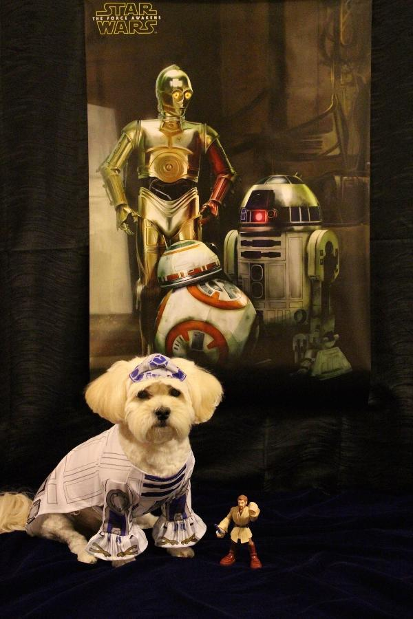Star Wars R2-D2 Dog Costume