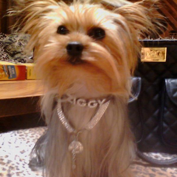 Swarovski 5-Row Crystal Dog Necklace
