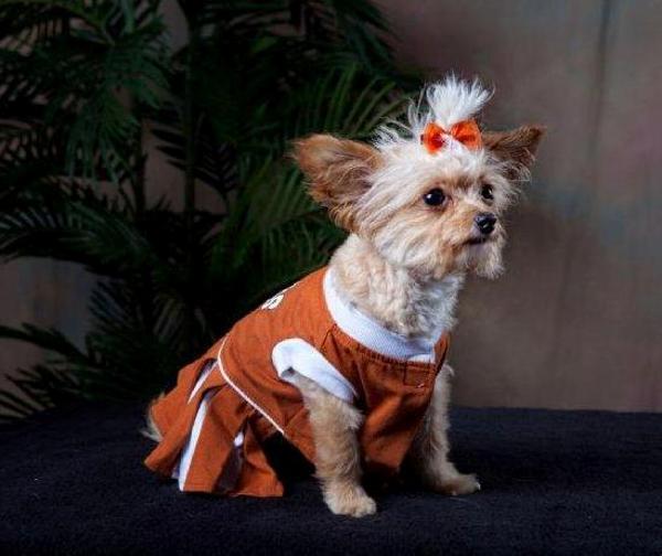Texas Longhorns Cheerleader Dog Dress Baxterboo