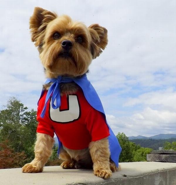 Underdog Dog Halloween Costume