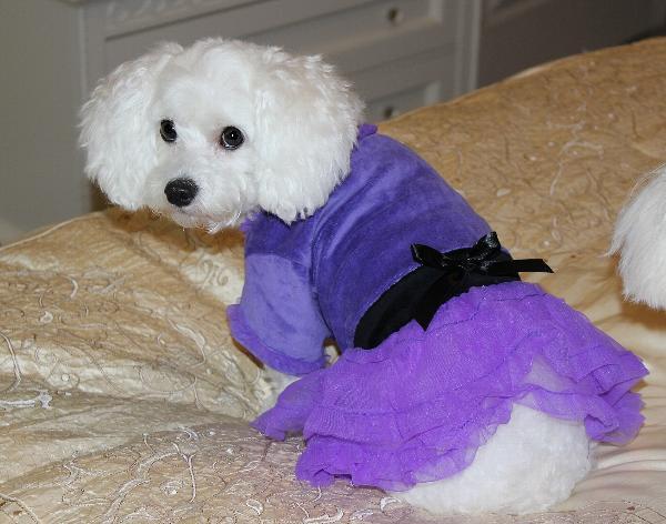 Vibrant Party Dog Dress - Ultra Violet