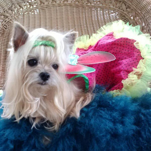 Watermelon Fairy Dog Costume