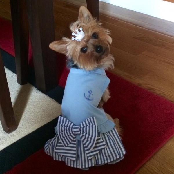 Wiggle Dog Dress by Pinkaholic - Blue