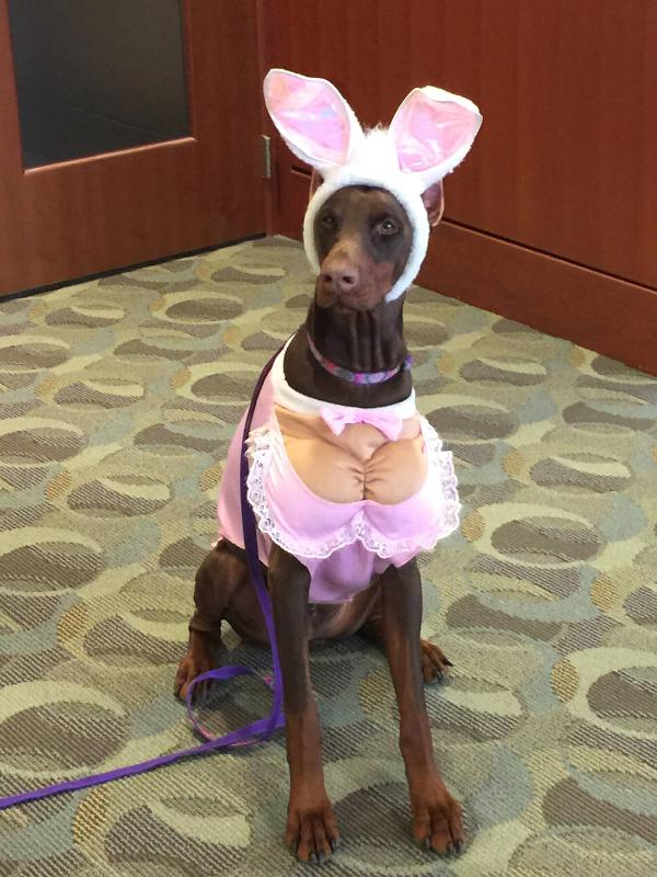 Zelda Hunny Bunny Halloween Dog Costume Baxterboo