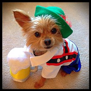 Lederhosen Dog Breed