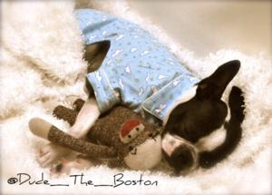 Dude the Boston
