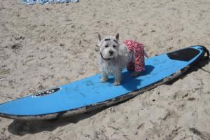 Hawaiian Print Dog Board Shorts Red At Baxterboo