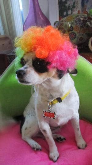 Rainbow Afro Wig Dog Costume Baxterboo