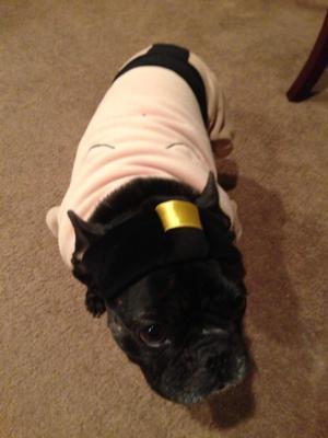 Sumo Wrestler Halloween Dog Costume At Baxterboo