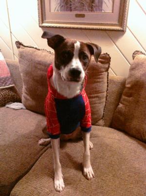 Superhero Dog Costume Red Spider Dog Baxterboo