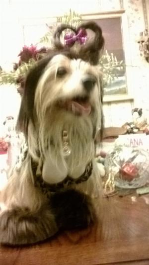 The Lady Is A Tramp Dog Costume Baxterboo