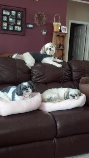 zoey, bella, and beau