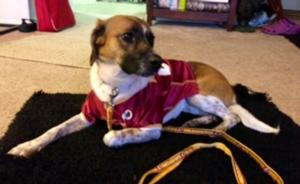 washington-redskins-officially-licensed-