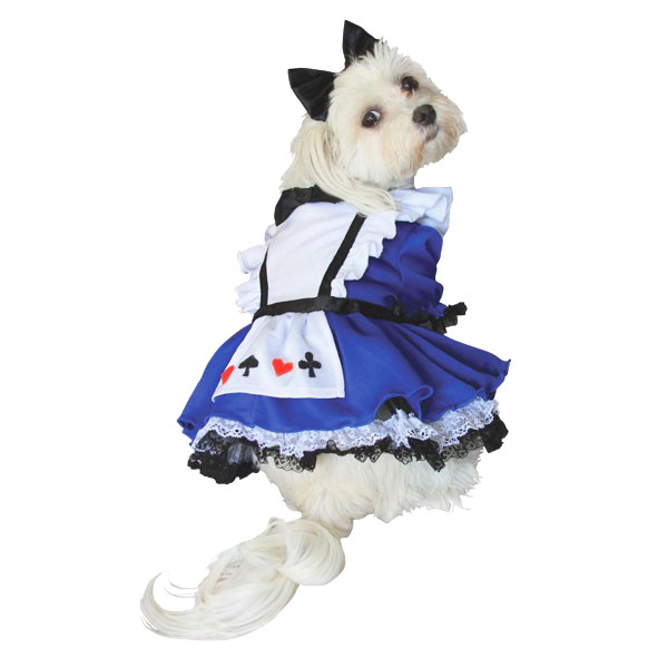 Alice In Wonderland Halloween Dog Costume Baxterboo