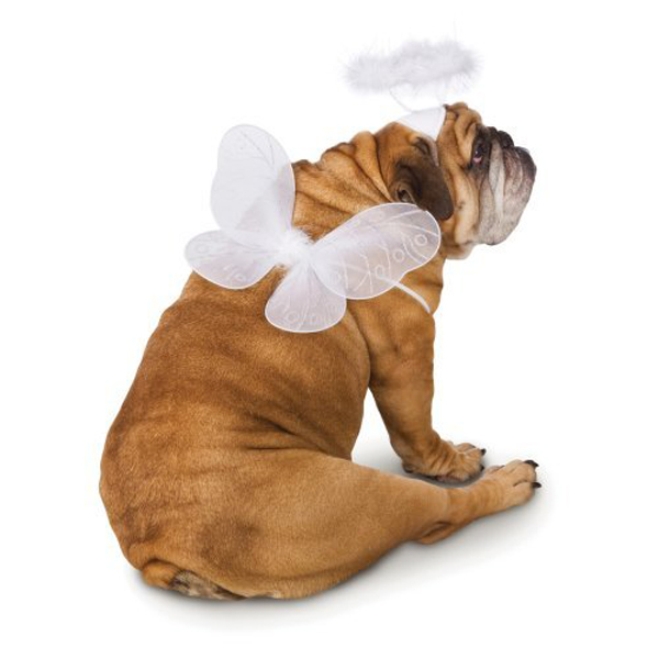 Angel Pet Wings Dog Costume - White