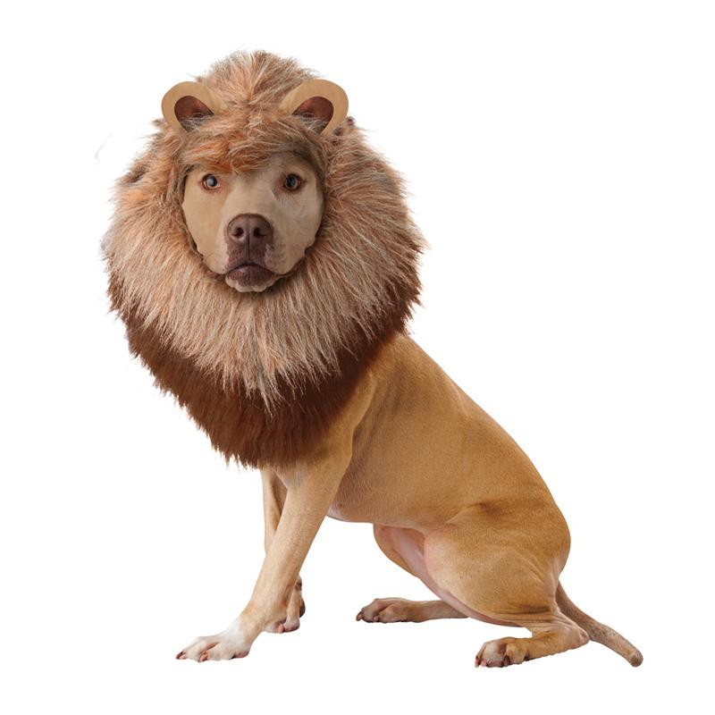 Animal Planet's Lion Halloween Dog Costume