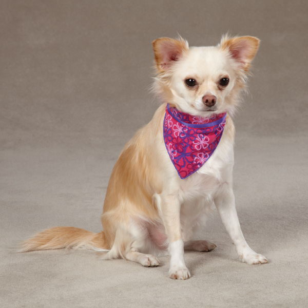 Aria Carolina Collection Dog Bandana - Raspberry