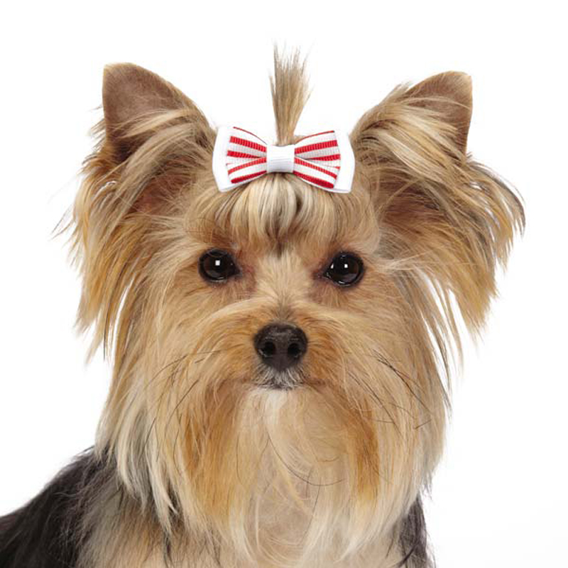 Aria Peppermint Dog Barrettes