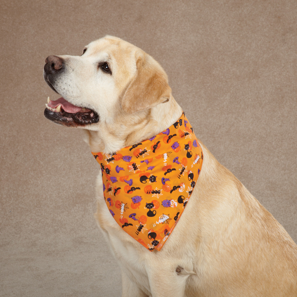 Aria Spooky Dog Bandana - Orange