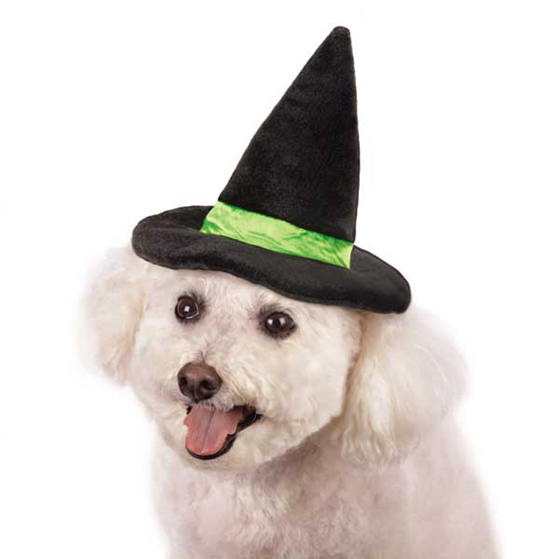 Aria Witch Dog Hat