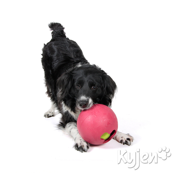 Ball in Ball Dog Toy