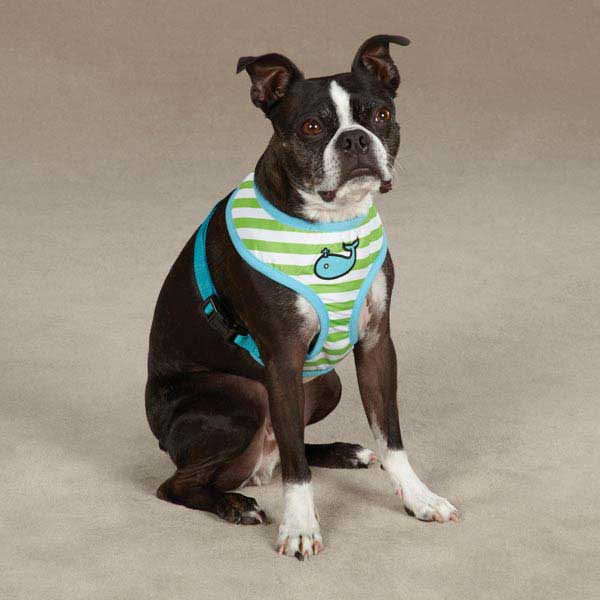 Beachcomber Dog Harness by Zack & Zoey - Parrot Green