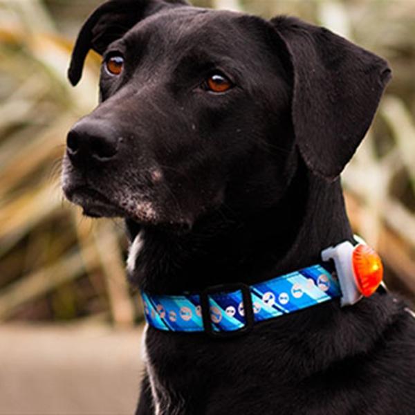 Canine Safety Light Collar Attachment - Orange