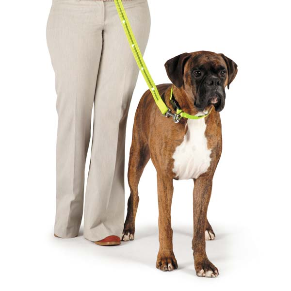 Fluorescent LED Dog Leash - Yellow
