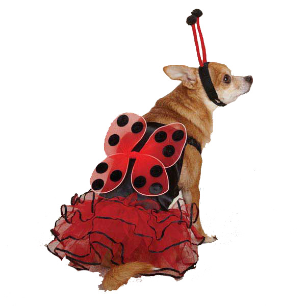 Casual Canine Lucky Bug Dog Costume