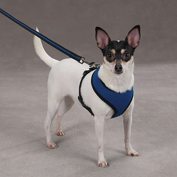 Casual Canine Mesh Dog Harness - Blue