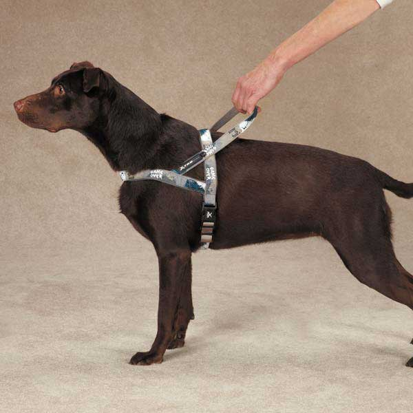 Casual Canine Xtrm Game Over Harness - Gray