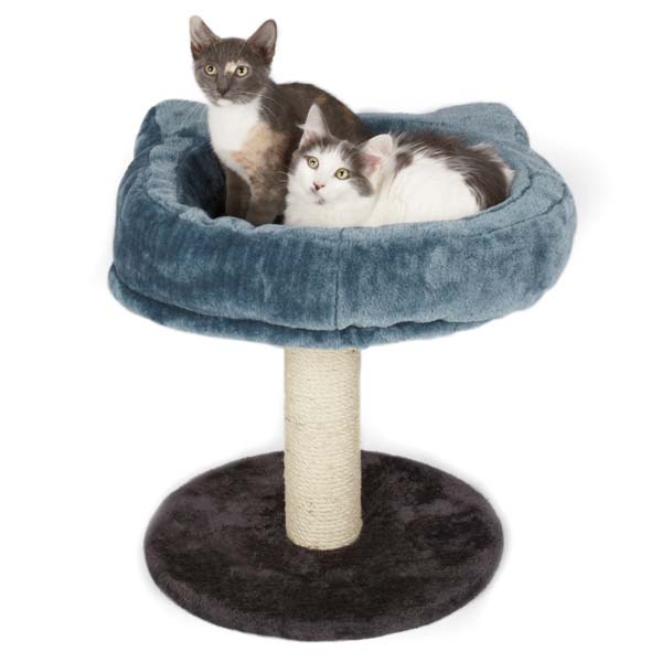 Furniture For Large Cats also Ragdoll Photos likewise Watch furthermore Finally A Chair For Your Standing Desk besides Cat scratching posts. on cat scratching carpet
