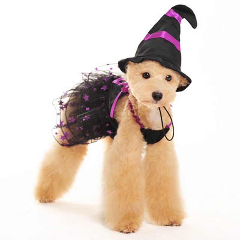 Charming Witch Dog Dress and Hat by Dogo