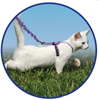Come with Me Kitty Harness & Bungee Leash - Green