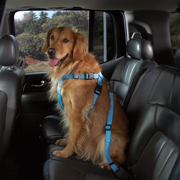 Cruising Companion Car Harness - Light Blue
