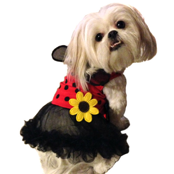 Daisy Lady Bug Dog Costume by Leg Avenue