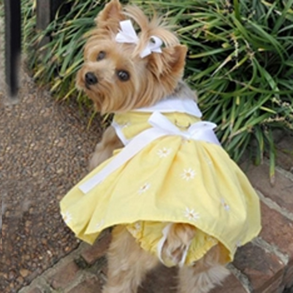 Daisy Dog Dress Set with Panties and Leash - Yellow